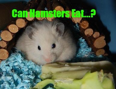 Can Hamsters Eat / Hamster Safe Food List - DwarfHamsterHome com